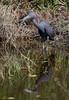 05-10-18-0016920 (Lake Worth) Tags: animal animals bird birds birdwatcher everglades southflorida feathers florida nature outdoor outdoors waterbirds wetlands wildlife wings