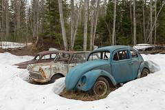 Schneekäfer (mariburg) Tags: rotten marode forgotten ruin decay desolate derelict cars rustycars auto canoneos6d sigma35mm14dghsmart vw vwkäfer