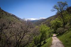 Sierra Nevada, Andalucía (Adrià Páez) Tags: sierra nevada andalucía granada landscape nature mountains snow peak sky trees vegetation green path spain españa europe