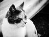 3674 - Macchia (Diego Rosato) Tags: macchia gatto cat animal animale pet fuji x30 rawtherapee bianconero blackwhite