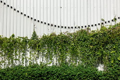 Unfair race (N808PV) Tags: rx100 iv race green fence suan lum