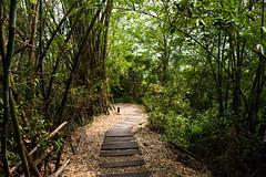 九九峰步道 (briandodotseng59) Tags: asia taiwan coth5 color nature hike landscape grey yellow green view nikon nikkor digital sun light mountain