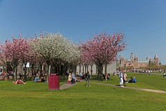 Museumplein - Amsterdam (Netherlands) (Meteorry) Tags: europe nederland netherlands holland paysbas noordholland amsterdam zuid south sud museumplein vangoghmuseum rijksmuseum spring printemps blossom fleurs pelouse lawn people happy rose pink dutch april 2018 meteorry