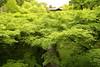 Green season (Teruhide Tomori) Tags: landscape forest tree green momiji maple kyoto japan japon zentemple tofukujitemple leaf spring 緑 新緑 モミジ 東福寺 東山 京都 日本 禅寺 春 庭園
