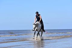 DSC_0283 (marcnico27) Tags: zandvoort beach beachforamsterdam strand shore noordzee northsea wet wildlife jump sport 2018 marcnico27 outdoor sky horse