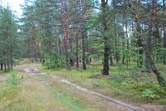 Волинський ліс Лісова дорога InterNetri Ukraine 1950325077