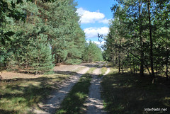 Волинський ліс Лісова дорога InterNetri Ukraine 1867530100