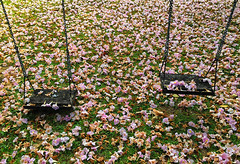 swing (abtabt) Tags: trinidadandtobago tt portofspain pos yard flower iphone6 tree fall grass ground swing garden