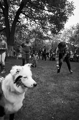 (noir imp) Tags: grass dog streetphotography yea youngevanstonartists glasses kids monochrome ricoh park art artfestival evanston