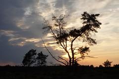 Zonsondergang bij Radio Kootwijk (Leo van Zanten - Fotoalbum (Photoalbum)) Tags: ondergaandezon sunset veluwe radiokootwijk bomen boom trees tree