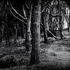 Choices (Missy Jussy) Tags: trees woodland wood forest 70200mm ef70200mmf4lusm ef70200mm canon70200mm 5d canon5dmarkll canon5d canoneos5dmarkii canon light shadows darkness mono monochrome bw blackwhite blackandwhite