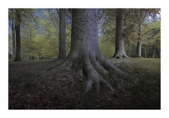 Liesbos Breda (cees van gastel) Tags: ceesvangastel canoneos550d sigma1020mm trees bomen bos woods nature natuur landschap landscape liesbosbreda breda netherlands nederland noordbrabant