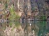 Mühlheim/Hanau - Vogelsberger See (Jorbasa) Tags: jorbasa hessen wetterau germany deutschland geotag mühlheim hanau vogelsbergersee lake naturschutzgebiet wandergebiet basalt steilwände stepwalls schwan swan tier vogel bird animal