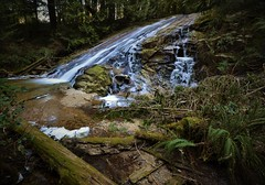 Frozen Falls (Rudi Verspoor) Tags: water waterfall canada woods forest winter trees british columbia