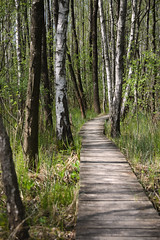 IMGP14120 (Łukasz Z.) Tags: poleskiparknarodowy nationalpark starezaucze lubelskie rzeczpospolitapolska sigma1750mmf28exdchsm pentaxk3