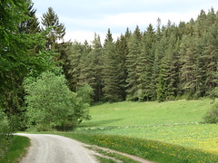 IMG_9450 (germancute) Tags: outdoor wald wildflower wiese walk wolken nature landscape landschaft thuringia thüringen germany germancute blume flower