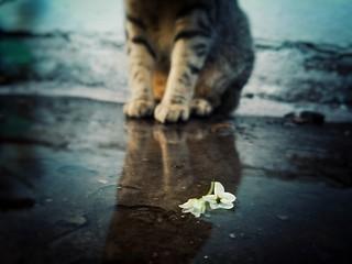 ○● El amor es universal y carece de etiquetas. Amo a mi pequeña gatita●○