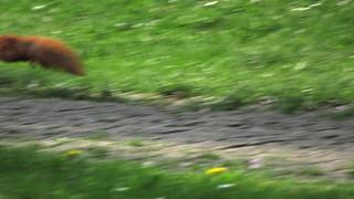 Heute kein Eichhörncheneintopf...