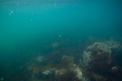20180430-DSC_1005-2.jpg (d3_plus) Tags: drive fish port apnea 1030mm izu sea wideconversionlens j4 skindiving underwater nikon1 景色 uwlh10028m67type2 魚 uwlh10028m67 watersports wpn3 風景 息こらえ潜水 マリンスポーツ japan sky ニコン 水中 ワイドコンバージョンレンズ nikon nikonwpn3 marinesports 素潜り ウォータープルーフケース inonuwlh10028m67type2 nikkor ニコン1 スキンダイビング nikon1j4 diving 2781mm 海 snorkeling ワイコン inon zoomlense scenery イノン ズーム eastizu 1030mmpd 空 日本 東伊豆 waterproofcase シュノーケリング 1nikkorvr1030mmf3556pdzoom