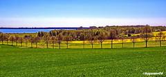Landschaftspanorama (garzer06) Tags: grün raps landschaftsfoto deutschland altkamp wasser mecklenburgvorpommern landschaftsbild naturephotography gelb ostsee bodden naturphoto landscapephotography inselrügen naturfoto insel naturfotografie rügen blau landschaftsfotografie
