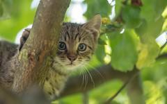 kittens (59) (Vlado Ferenčić) Tags: kitty kittens vladoferencic animals vladimirferencic catsdogs cats animalplanet zagorje hrvatska hrvatskozagorje croatia nikond600 nikkor8020028
