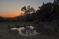 Evening Serenity (Deepgreen2009) Tags: serenity calm pond pool still reflection