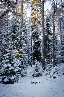 Winter Wonderland #2