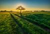 Sonnenaufgang über den Feldern (Franks Fotoecke) Tags: weg feld baum schwarzwald morgenlicht path light morninglight sunrise blackforest green tree gegenlicht wonderful gras himmel