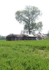 Bunkerlinie Westabschnitt, Bazel (Erf-goed.be) Tags: bunker westabschnitt bramensdam bazel kruibeke archeonet geotagged geo:lon=4249 geo:lat=511526 oostvlaanderen