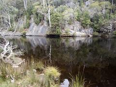 Platypus habitat (Baractus) Tags: platypus habitat mountain valley tasmania australia john oates inala nature tours