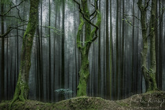 Old Wood (PKpics1) Tags: woodland wood woods trees old green leaves topcoat somerset england landscape twisted