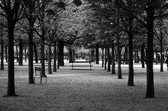 Perspective (•Nicolas•) Tags: analog bw film fp4 ilford m4p nicolasthomas alley perspective paris france bench banc chair chaise parc nb allée