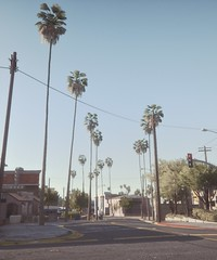 Trees | GTA V (Stellasin) Tags: angeles gaming game beauty beautiful buildings blur car cars city clouds downtown engine weather reflection people flare fog graphics gtav gta grass hot highway photography sky los mods mountains motion road trees screenshot sun sunrise v water