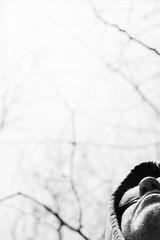 Aspiration (george.bremer) Tags: below epson film filmferrania meditation olympus om2n p30 rodinal scan silhouette standdevelopment stark v750 contemplation bright sunlight sunshine hood trees