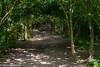A Walk In The Shade (M C Smith) Tags: green shade light bird leaves pentax k3 path shadows black brown white
