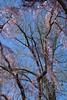 20180420.027 (FOTOGRAFIA.Nelo.Esteves) Tags: 2018 usa us unitedstates nj newjersey monmouthcounty holmdel park nature spring blossoms