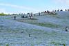 20180415-DS7_4280.jpg (d3_plus) Tags: 雨 丘 landscape d700 路上 cloudy streetphoto 日常 80200mmf28 thesedays dailyphoto street tele sea garden 望遠 遊園地 自然 海岸 景色 daily ガーデン plant park rainy telephoto 空 rain japan 曇り ニコン sky amusementpark ibaraki nikon nikond700 aiafzoomnikkor80200mmf28sed flower 80200mmf28af 花 8020028 路上写真 hill 植物 海 nature 80200mmf28d 地形 scenery 80200mm 茨城 庭園 ストリート nikkor 公園 日本 bloom 80200 jr beach