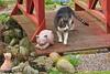 IMG_2363 (d_fust) Tags: cat katze pauline fust tier haustier kätzchen animal кот gato katt 貓 kissa γάτα 猫 kedi macska แมว gatto बिल्ली gatito γατάκι yavrusu 小貓 kitten का बच्चा anak kucing gattino 仔猫 고양이