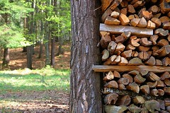 Wood (Tomek Sz) Tags: wood forest green brown nature silence