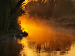 Sunrise (johnb/Derbys/UK) Tags: myworld mystyle myway midlands magik mmmm moreisless pov sunrise summer shape swan walk wet water colour countryside chillout derbyshireuk shardlow england earlymorn alive asshot misty