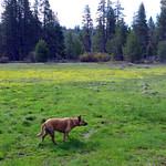 Meadow dog thumbnail
