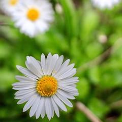 Flower power (briannalhendricks) Tags: canonrebelt6 canonrebel canon flowerphotography floralphotography flowers