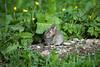 Bunny (Eugene O'Connor) Tags: bunny rabbit wildlife sleeping furry nature bugs animal canon ireland fermoy cork 100400