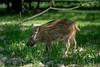 _DSC1952.jpg (Burghart-Alexander) Tags: orte deutschland pflanze poing wildpark tiere bäumeundsträucher europe bayern bundesland umwelt