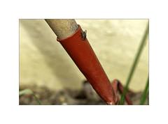 Aide au jardinage ! (Gérard Boisnard) Tags: nature insectes jardinage humour boisnard