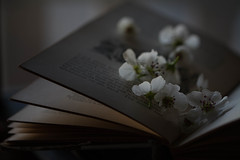 Turning Pages (Captured Heart) Tags: blossoms pearblossoms flowers whiteflowers book bookpages softlight