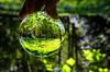 Bluebell Glade (Stephen Reed) Tags: nationaltrust naturalbeauty crystalball garden nikon d7000 lightroomcc surrey england spring trees bluebells lake