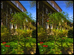 Frühling in Berlin-Dahlem 3-D / CrossView / Stereoscopy / HDRaw (Stereotron) Tags: berlin spreeathen mitte metropole hauptstadt capital metropolis brandenburg city urban dahlem spring frühling grün vorgarten quietearth europe germany deutschland crosseye crossview xview pair freeview sidebyside sbs kreuzblick 3d 3dphoto 3dstereo 3rddimension spatial stereo stereo3d stereophoto stereophotography stereoscopic stereoscopy stereotron threedimensional stereoview stereophotomaker stereophotograph 3dpicture 3dimage twin canon eos 550d yongnuo radio transmitter remote control synchron kitlens 1855mm tonemapping hdr hdri raw