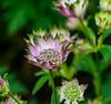 Summer Sign's. (Omygodtom) Tags: macro tamron90mm d7100 dof bokeh nature flower lowkey flora design 7dwf usgs meadow