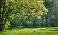 Hotel Holthurnsche Hof (Karl Van Loo) Tags: bergendal hotelholthurnschehof natuur nature zonnig sun tree trees boom bomen walk walking wandelen gras grass